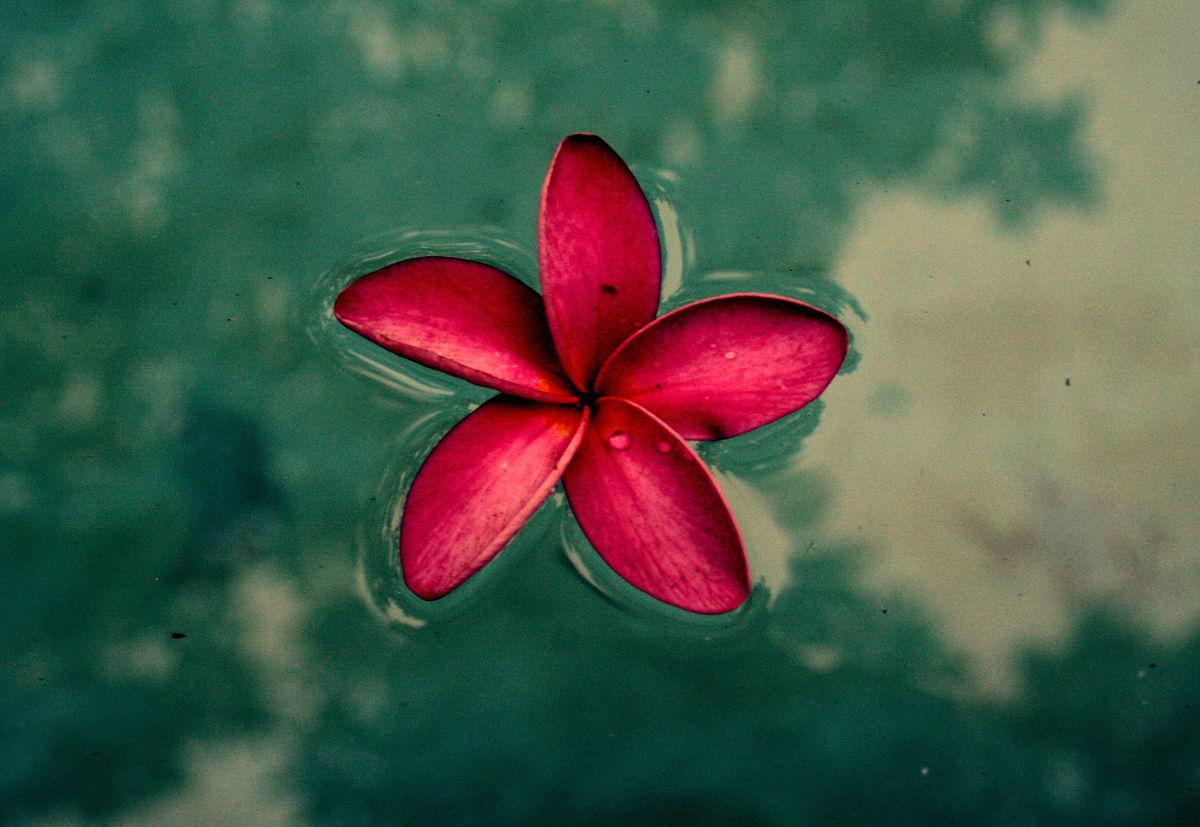 Flor-cangilones_opt